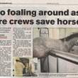 No Foaling Around
